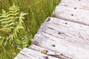 Im Schwarzen Moor beim Dreiländereck können mit viel Glück Mooreidechsen entdeckt werden. Die Streutalallianz bietet viel für Flora und Fauna (Foto: Leska Hörner)