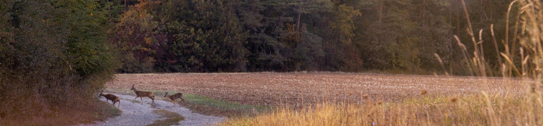 Rehe laufen durch das herbstliche Streutal (Foto: Leska Hörner - Leskas Wunderwelt)